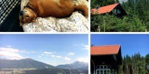 Ein Shiba Inu in Österreich, die Stoantaler Höfl in Innsbruck